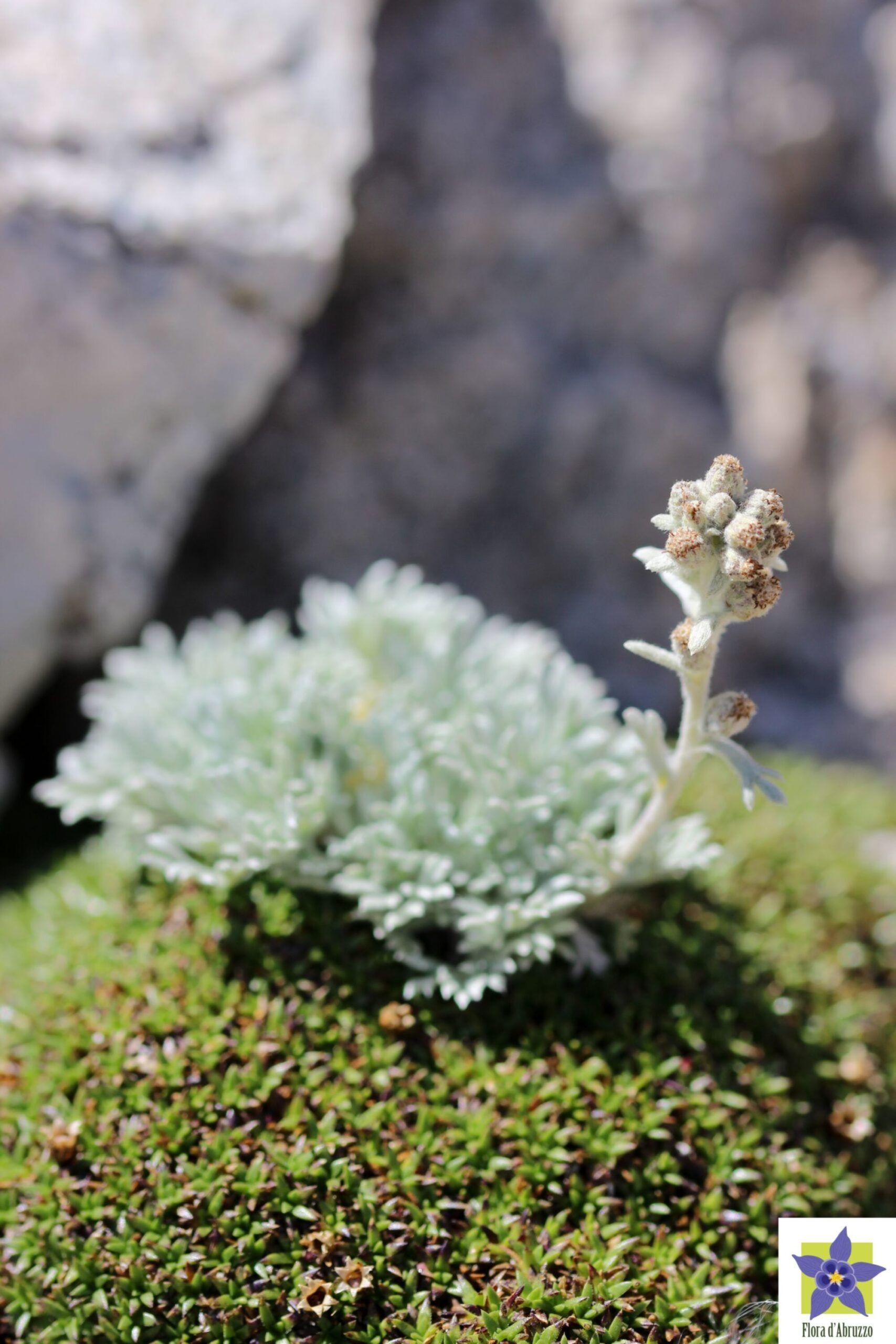 Flora d'Abruzzo